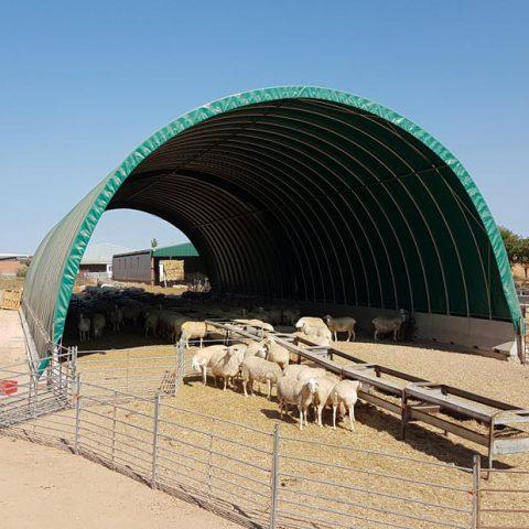 Cobertizo ovejas