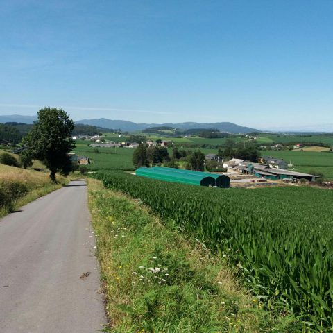 Secadero agrícola